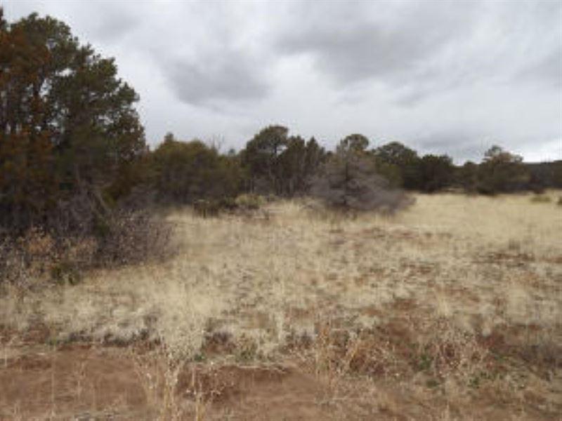 NM Manzano Mountains Wooded : Estancia : Torrance County : New Mexico