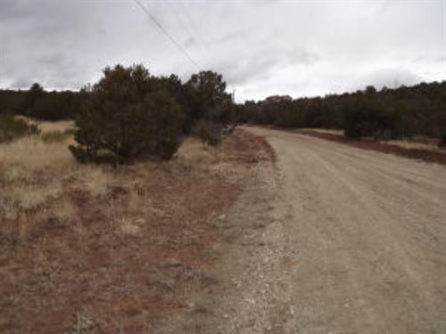 Central NM Manzano Mountain Wooded : Estancia : Torrance County : New Mexico