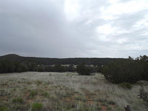 Central New Mexico 80 Acre Manzano : Estancia : Torrance County : New Mexico