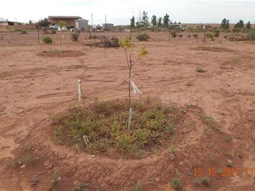 Almost 2 Acres Land New Pecan : La Luz : Otero County : New Mexico