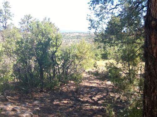 Land Gated Subdivision Abundant : Los Ojos : Rio Arriba County : New Mexico