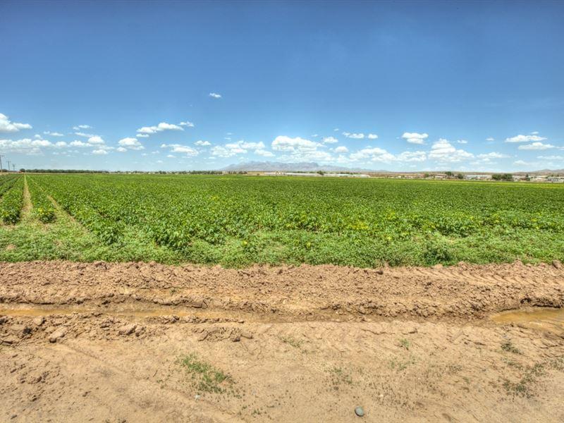 Farm, Rio Grande Valley, Nm, Great : Mesquite : Dona Ana County : New Mexico