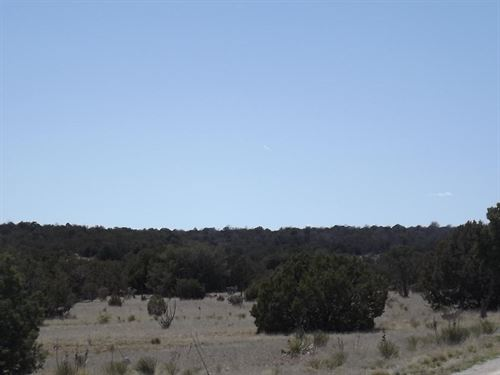 Wooded 10 Ac Home Site Moriarty : Moriarty : Torrance County : New Mexico