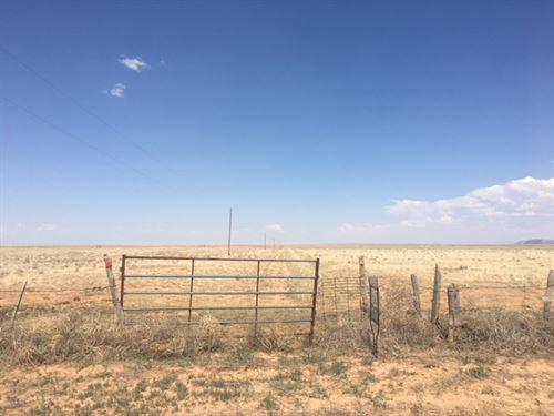 Grassland Grazing Mountainair New : Mountainair : Torrance County : New Mexico