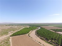Pecan Farm New Mexico, Farm : Rincon : Dona Ana County : New Mexico