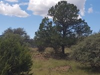Silver City, NM Land, 1.375 Acres : Silver City : Grant County : New Mexico