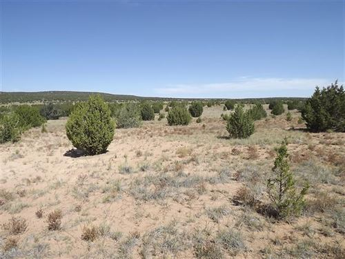 10 Acres Torrance County New Mexico : Tajique : Torrance County : New Mexico
