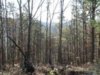 Recreational Land in Upstate, NY : Candor : Tioga County : New York