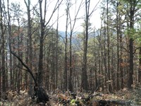 Recreational Land For Sale NY : Candor : Tioga County : New York