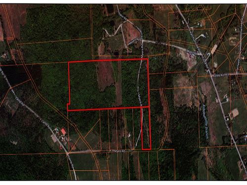 Well Stocked Woodland Acreage Good : Newark Valley : Tioga County : New York