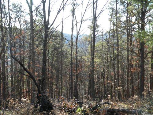 Timber & Hunting Land For Sale, NY : Van Etten : Chemung County : New York