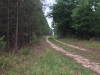 57Ac Carter Rd Tract Hunting Timber : Allendale : Allendale County : South Carolina