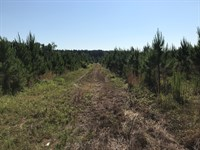 245 Acre Hunting/Timberland Tract : Appleton : Allendale County : South Carolina
