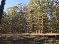 6.73 Acres, Road Frontage, Wooded : Pikeville : Bledsoe County : Tennessee