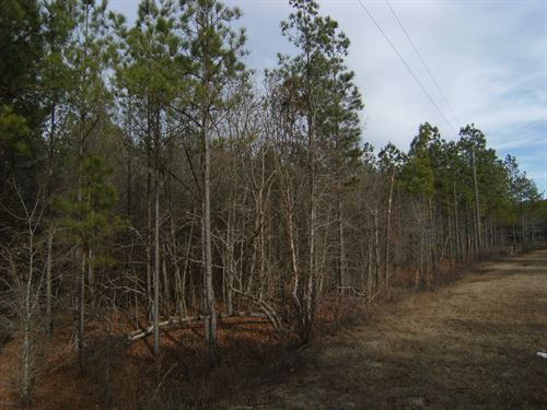 Beautiful 5.7 Acres Wooded Level : Cassatt : Kershaw County : South Carolina