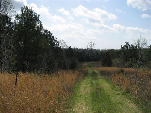 Large Acreage TN Land Creek : Adamsville : McNairy County : Tennessee
