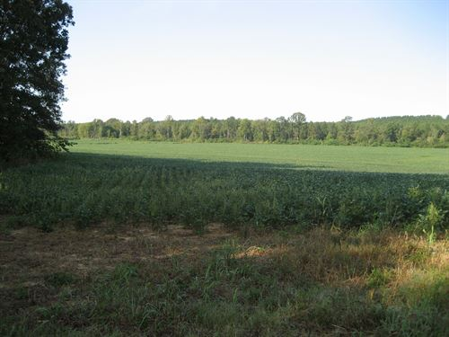 Row Crop Land In Tn, Hunting Land : Adamsville : McNairy County : Tennessee