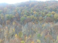 East Tennessee Mountain Property : Bean Station : Grainger County : Tennessee