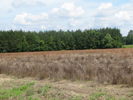 111.44+/- Acres Cultivated & Wooded : Brooklet : Bulloch County : Georgia