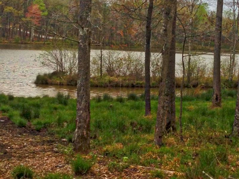 TN Lakefront Lot Jimmy Houstan's : Cedar Grove : Carroll County : Tennessee