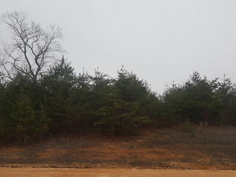 Sale Pending, South TN Land Clifton : Clifton : Wayne County : Tennessee