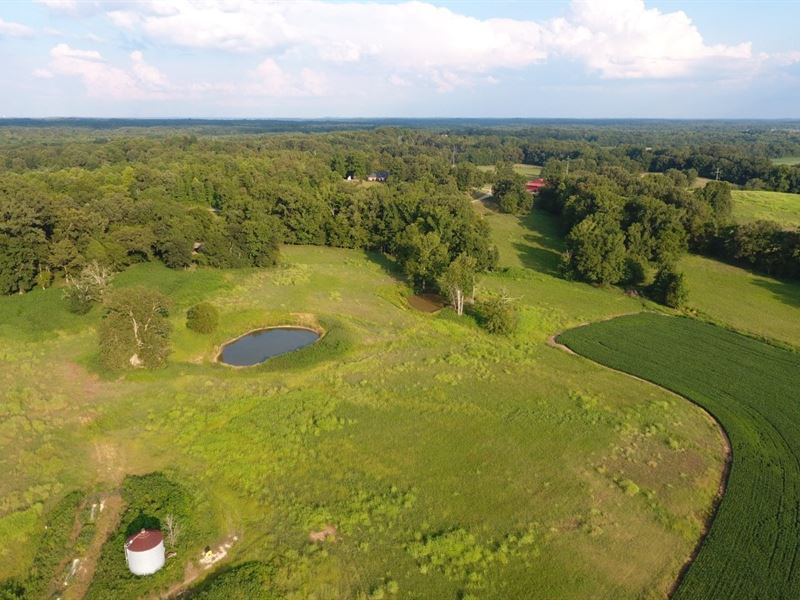 Henderson County, TN 130 Acres Crop : Darden : Henderson County : Tennessee