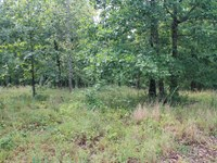 Hohenwald, Tn Lewis County 5 Acres : Hohenwald : Lewis County : Tennessee
