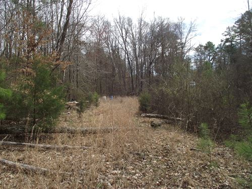 Wooded Tennessee Land, Stream : Michie : McNairy County : Tennessee