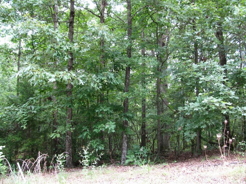 Wooded Land Savannah, Tn Pickwick : Savannah : Hardin County : Tennessee