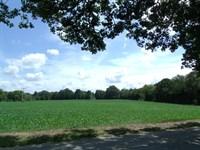 Tillable Land Tn, Crop Land, Creek : Scotts Hill : Decatur County : Tennessee