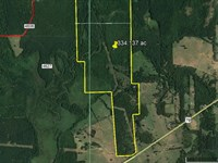 334 Acres Forested Recreation Land : Henderson : Rusk County : Texas