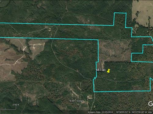 487 Acres Recreational Hunting Land : Colmesneil : Tyler County : Texas