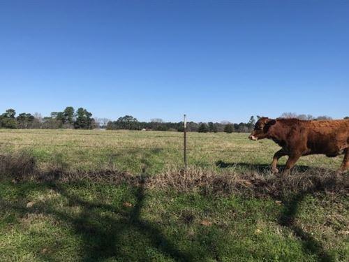 Recreational Ranch / Building Site : De Kalb : Bowie County : Texas