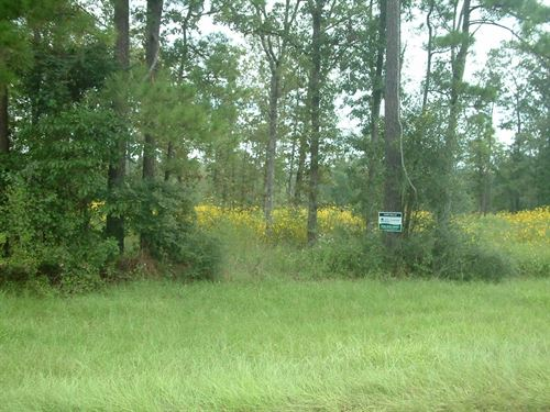 45 Acres Wooded Residential Land : Lufkin : Angelina County : Texas