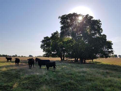 Cooks Ranch in Miller Grove : Miller Grove : Hopkins County : Texas