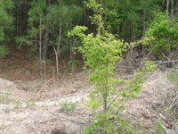 Undeveloped Commercial Land Inside : Palestine : Anderson County : Texas