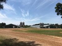 43 Acres Working Poultry Farm, East : Winnsboro : Wood County : Texas