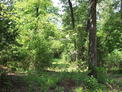 Winnsboro, Texas Wooded Area : Winnsboro : Wood County : Texas