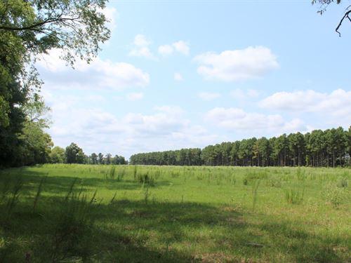 17.5 Acres Pasture Grazing Hunting : Winnsboro : Wood County : Texas
