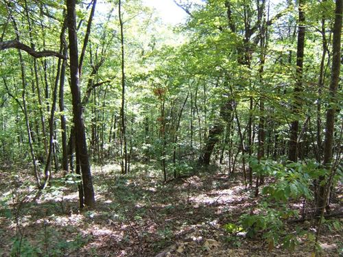 Wooded Mountain Real Estate : Abingdon : Washington County : Virginia