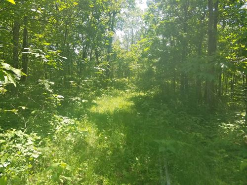 35 Acres Private Hunting Land Bland : Bastian : Bland County : Virginia