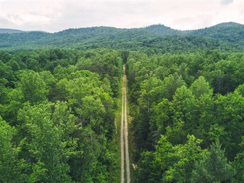 Large Hunting, Recreational Land : Callaway : Franklin County : Virginia