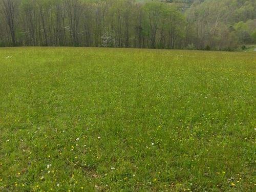 Large Parcel Land Cedar Bluff, VA : Cedar Bluff : Tazewell County : Virginia