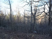 Secluded Wooded Lot Floyd County : Copper Hill : Floyd County : Virginia