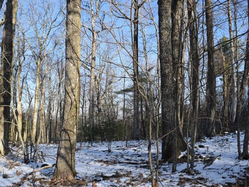Wooded Acreage in Copper Hill VA : Copper Hill : Floyd County : Virginia