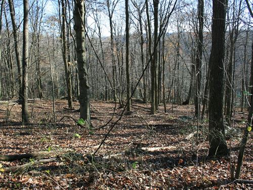 8.6 Acres Land Patrick County : Meadows Of Dan : Patrick County : Virginia