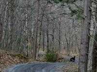 5.20 Mountain Lot Highland County : Monterey : Highland County : Virginia