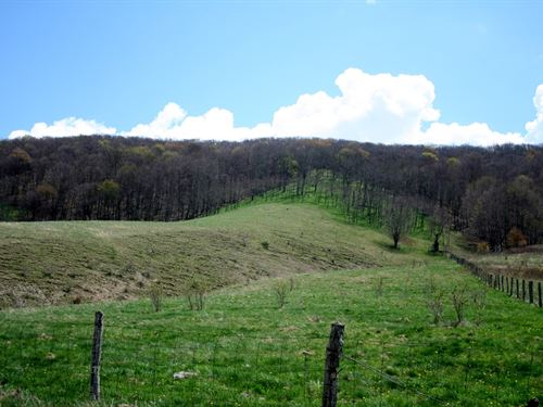 33.7 Acres Open Wooded Land : Monterey : Highland County : Virginia