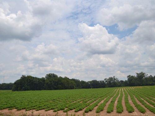 Land For Sale In Cottonwood, Al : Cottonwood : Houston County : Alabama