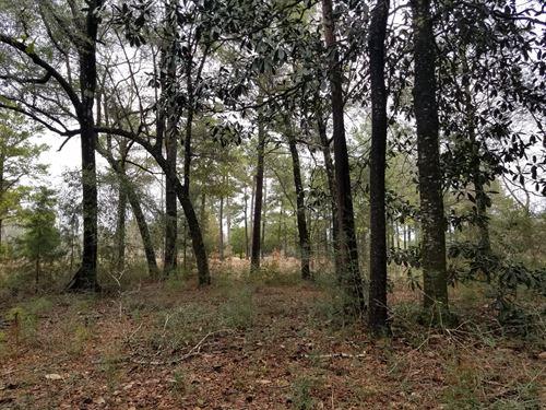 7 Acres Choctawhatchee River Access : Hartford : Geneva County : Alabama